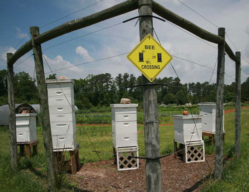 CCCC hives