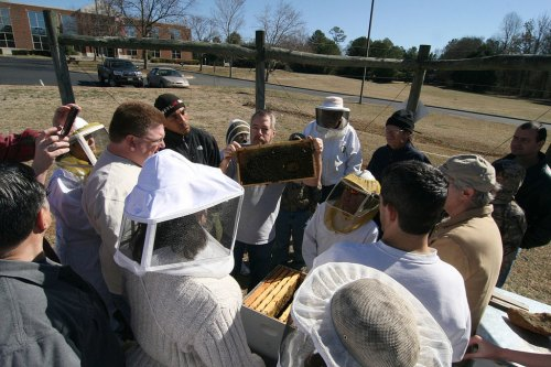 Field day with Master Beekeeper Michael Almond